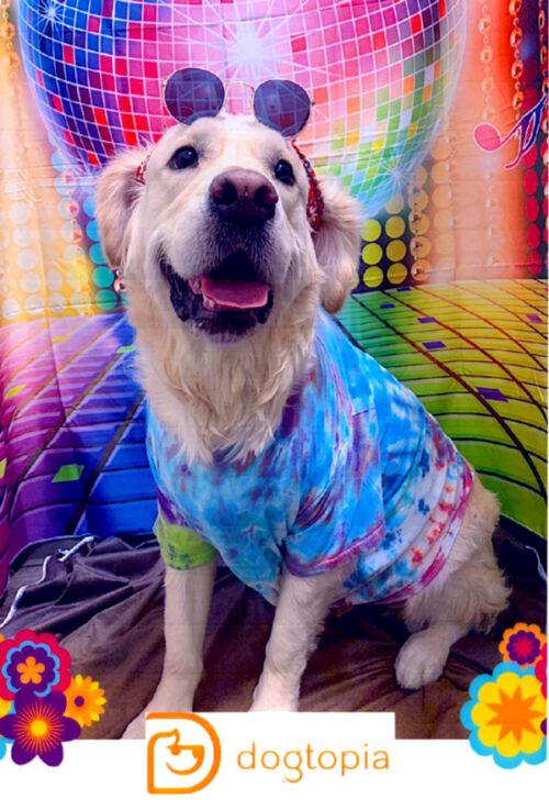 Jessie at Dogtopia